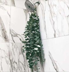 live plant for shower