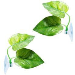 leaf shower plant