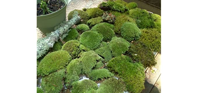 Appalachian Fresh - Live Moss for Shower